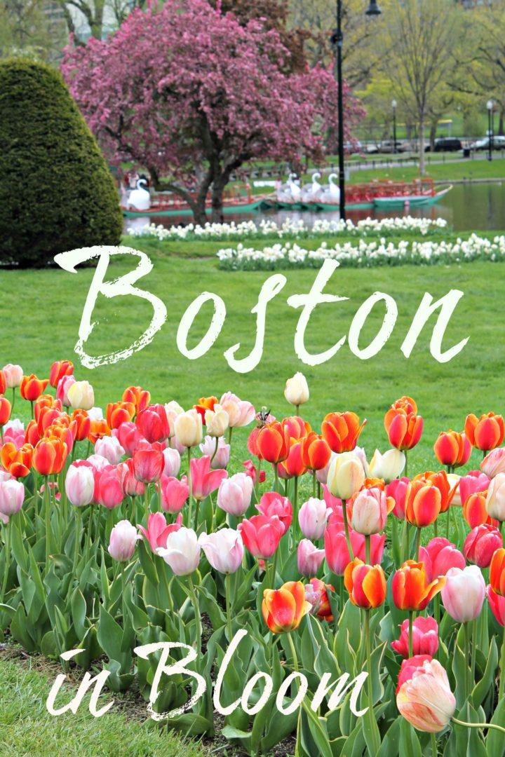 Boston in Bloom www.thedailyadventuresofme.com