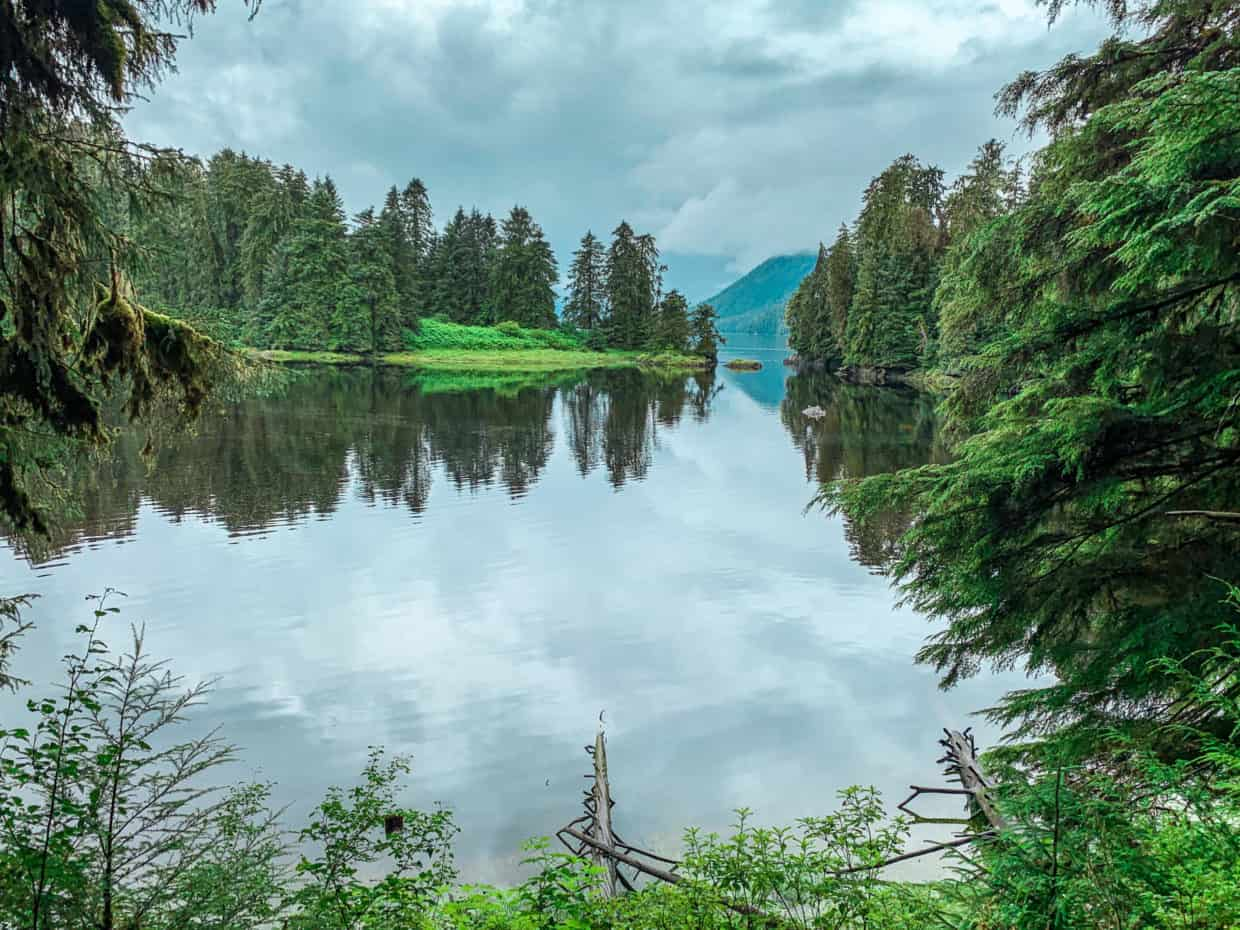 Seeing bear in the Tongass National Forest
